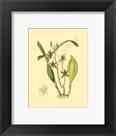 Framed Orchids I