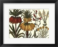 Framed Printed Arena Botanical I