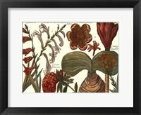 Framed Printed Arena Botanical II