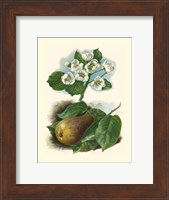 Framed Pear Blosom