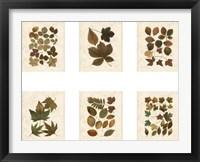 Framed Lodge Leaf Collection