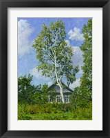 Framed Birch Tree Near Dwelling