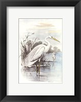 Framed White Heron