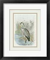 Common Heron Framed Print