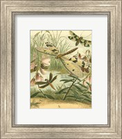 Framed Dragonfly Gathering I