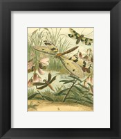 Framed Dragonfly Gathering I