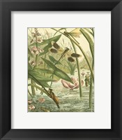 Framed Dragonfly Gathering II
