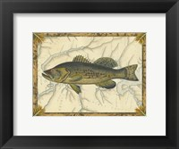 Framed Black Bass on Map