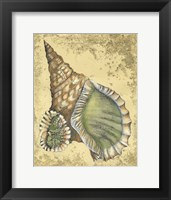 Sand and Shells I Framed Print