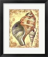 Sand and Shells II Framed Print
