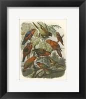 Framed Red Cassel Birds II