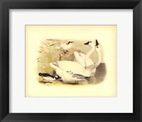 Framed American Swan