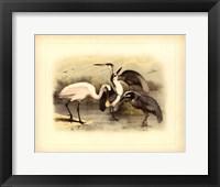 Framed Egret & Heron