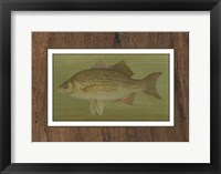 Framed White or Silver Bass
