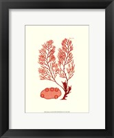 Shades of Coral II Framed Print