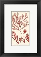 Shades of Coral IV Framed Print