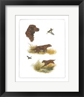 Framed Irish Setter