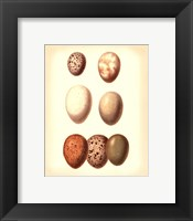Framed Bird Egg Study II