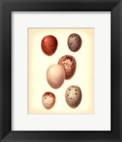 Framed Bird Egg Study III