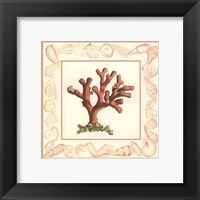 Framed Coral with Shell Border I