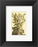 Framed Coral by the Sea I