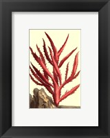 Coral by the Sea III Framed Print