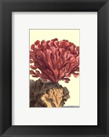 Coral by the Sea IV Framed Print