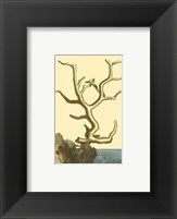 Framed Coral by the Sea VI