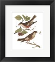 Framed Antique Bird Pair I