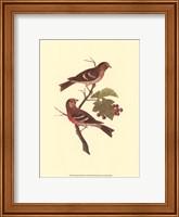 Framed Antique Bird Pair II