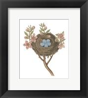 Framed Antique Bird's Nest I