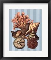 Framed Shell and Coral on Aqua I