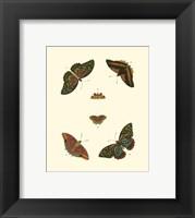 Framed Butterfly Study II