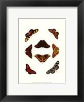 Framed Butterfly Study IV