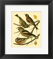 Framed Domestic Bird Family II