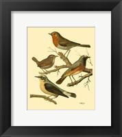 Framed Domestic Bird Family III