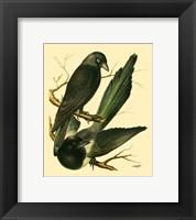 Framed Domestic Bird Family V