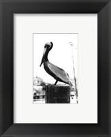 Framed Pelican Perch