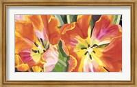 Framed Two Parrot Tulips