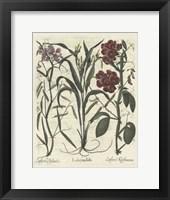 Framed Floral III