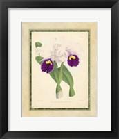 Framed Orchid I