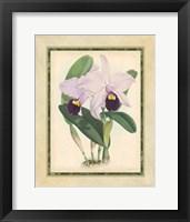 Framed Orchid IV