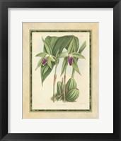 Framed Orchid VI