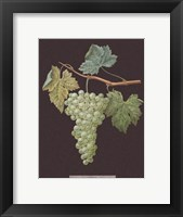 Framed White Grapes