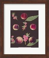 Framed Peaches