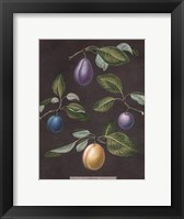 Framed Plums