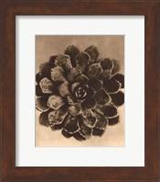 Framed Sepia Botany Study II