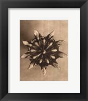Framed Sepia Botany Study IV