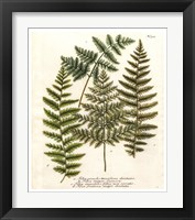 Framed Fern Gathering I