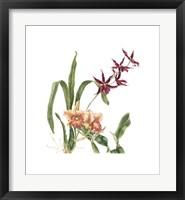 Framed Orchid I (Le)